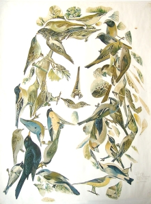 VogelVrouw